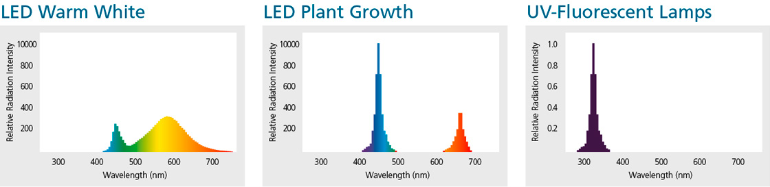 Spectral distribution of radiation of LED