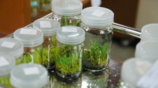 RUMED Application Life Science In Vitro Cultivation